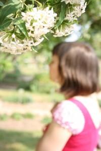 jardin_botanique_siro