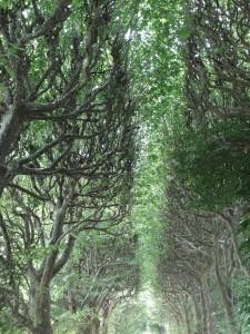 jardin_des_plantes01