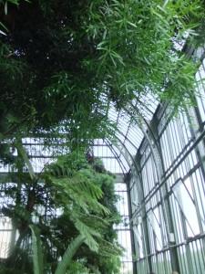 jardin_des_plantes_grandes_serres02