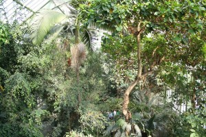 jardin_des_plantes_grandes_serres03