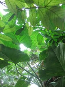 jardin_des_plantes_serre01