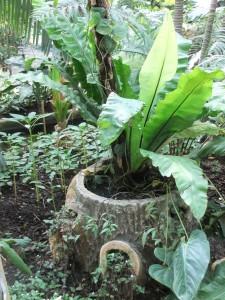 jardin_des_plantes_serre02