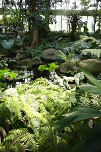 jardin_des_plantes_serre03