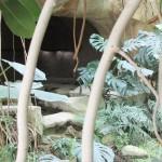 jardin_des_plantes_serre_grotte01
