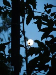 nuit_ete_lune